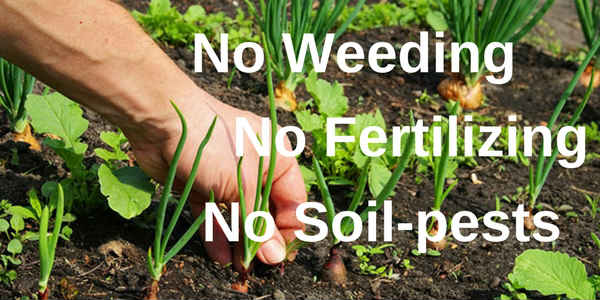 no weeding